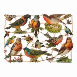 Poëzieplaatje (10st) Vogels