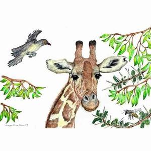 Ansichtkaart 1.25 Giraffe - 10 stuks
